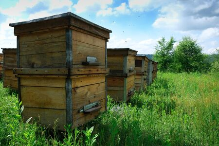 A beehive from a tree stands on an apiary. The houses of the bees are placed on the green grass in the mountains. Private enterprise for beekeeping. Honey healthy food products Reklamní fotografie