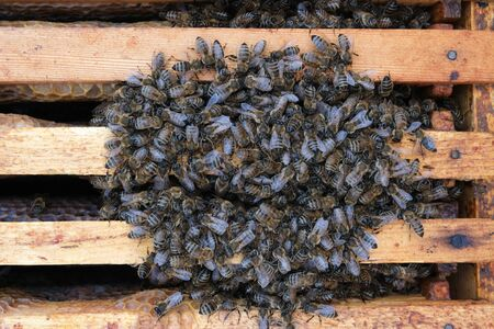 How bees winter in the hive. Overview of bee hive in winter. Wintering bees. 写真素材
