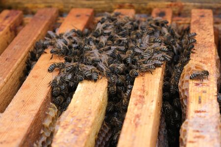 How bees winter in the hive. Overview of bee hive in winter. Wintering bees. Reklamní fotografie
