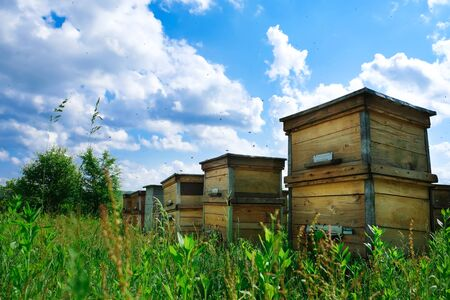 A beehive from a tree stands on an apiary. The houses of the bees are placed on the green grass in the mountains. Private enterprise for beekeeping. Honey healthy food products.