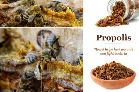 Propolis in the middle of a hive with bees. Bee glue. Bee products. Apitherapy. Propolis treatment. How it helps heal wounds and fight bacteria. Reklamní fotografie - 145602151