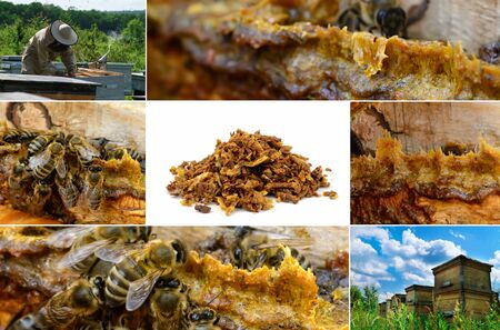 Propolis in the middle of a hive with bees. Bee glue. Bee products. Apitherapy. Propolis treatment. How it helps heal wounds and fight bacteria. Photo collage on beekeeping theme.