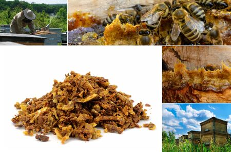 Propolis in the middle of a hive with bees. Bee glue. Bee products. Apitherapy. Propolis treatment. How it helps heal wounds and fight bacteria. Photo collage on beekeeping theme
