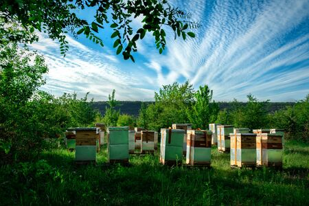 Eco-friendly apiary. An apiary where ecologically clean honey and other beekeeping products are obtained. Top views.