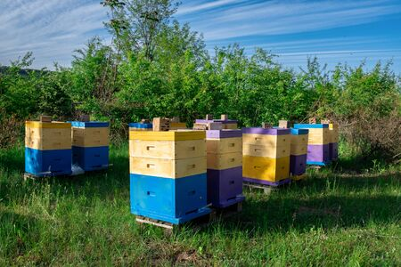 Eco-friendly apiary. An apiary where ecologically clean honey and other beekeeping products are obtained. Advantages of polyurethane hives. Top views. Reklamní fotografie