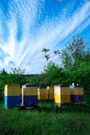Eco-friendly apiary. An apiary where ecologically clean honey and other beekeeping products are obtained. Advantages of polyurethane hives. Top views. 写真素材