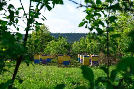 Eco-friendly apiary. An apiary where ecologically clean honey and other beekeeping products are obtained. Advantages of polyurethane hives. Top views. Reklamní fotografie - 147623702