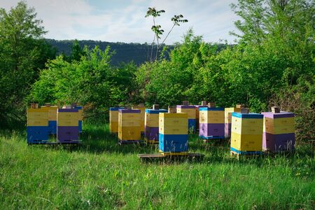 Eco-friendly apiary. An apiary where ecologically clean honey and other beekeeping products are obtained. Advantages of polyurethane hives. Top views. Stock Photo