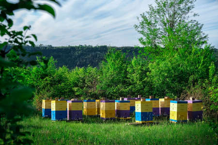 Eco-friendly apiary. An apiary where ecologically clean honey and other beekeeping products are obtained. Advantages of polyurethane hives. Top views