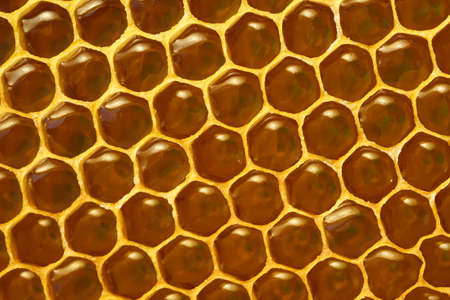 Background texture and pattern of a section of wax honeycomb from a bee hive filled with golden honey in a full frame view.