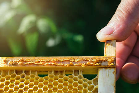 Propolis bee glue. How it helps heal wounds and fight bacteria. Apitherapy. Top views. Reklamní fotografie