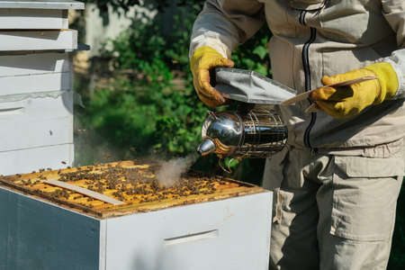 The beekeeper treats the bees of the varroa mite. Diseases of bees and their treatment. Varroasis. Varroa destructor.