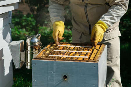 How to treat bees from varroa mite. The beekeeper treats the bees of the varroa mite. Diseases of bees and their treatment. Varroasis. Varroa destructor.