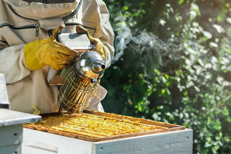 Bees make honey, Hives, Work of a beekeeper in an apiary, Natural honey production. Beekeeping concept.