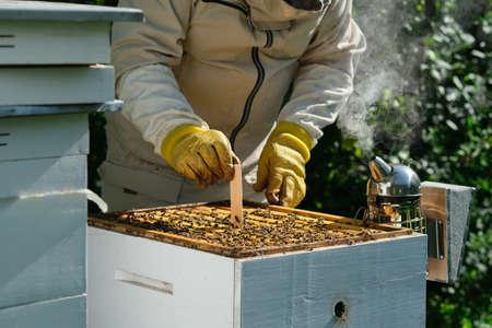 Varroa mite control. Varroa destructor. How to treat bees from varroa mite. The beekeeper treats the bees of the varroa mite. Diseases of bees and their treatment. Varroasis. Stock Photo
