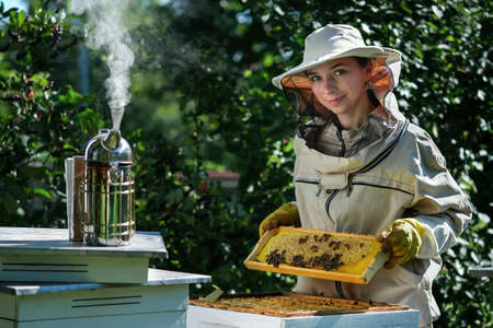 Portrait of a beautiful young female beekeeper working in an apiary near beehives with bees. Collect honey. Beekeeper on apiary. Beekeeping concept.