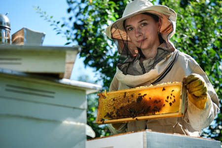 Young female beekeeper hold wooden frame with honeycomb. Collect honey. Beekeeper on apiary. Beekeeping concept. Stock Photo