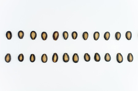 a seed: watermelon seeds on white background