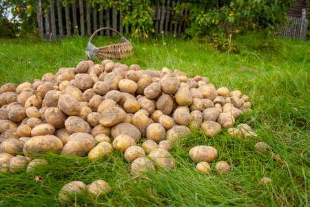 Potato similar to a man in the hands of a girl Foto de archivo