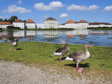 nymphenburg palace: Geese in artificial pond in front of the Nymphenburg Palace. Munich, Bavaria, Germany Editorial