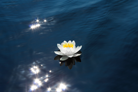 Beautiful white water lily in the sunshine