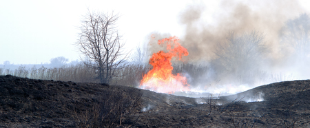 fire on the field, a strong flame from the burning of the grass for a better growth of new vegetation