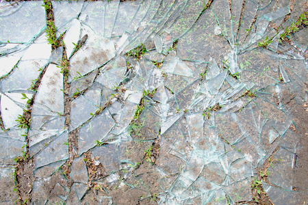 background of broken glass lying on the ground with sprouting grass
