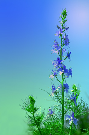 blue flowers on green stalk on a beautiful gradient background closeup