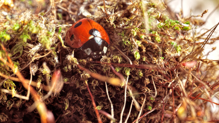 Ladybug. Red beetle in the shallow grass. A microcosm of insects. The big increase. Insects underfoot. A bug in the grass.