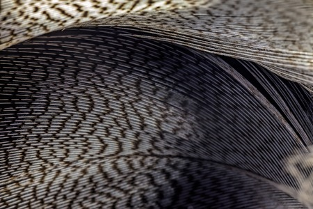 Bird feather and reflection. Spotted a bird feather on a black mirrored surface. The reflection and the object. Abstraction from a chaotic pattern. The image is partially blurred.