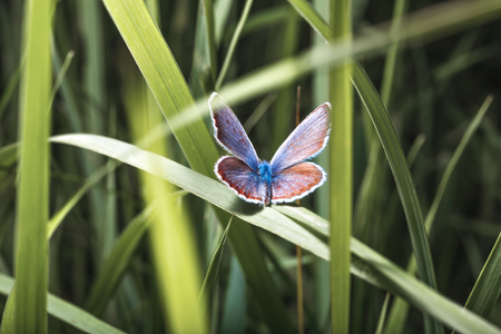 Little butterfly. Gorgeous butterfly small size. A beautiful insect. A winged dream. Colorful wings. A flight of fancy. The ease and spontaneity.