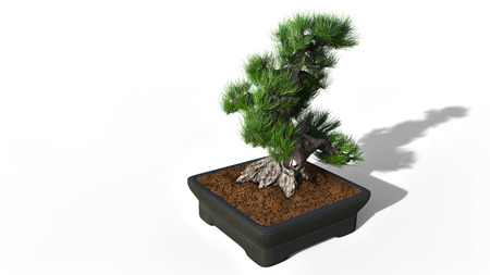 3D rendering.Coniferous bonsai classic shape. Rectangular pot in Oriental style. A perennial tree in the house. Japanese and Chinese art. Occlusion visualization.