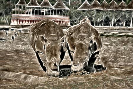 두 코뿔소입니다. 두 직면 코뿔소 양식에 일치시키는 인물. 스톡 콘텐츠