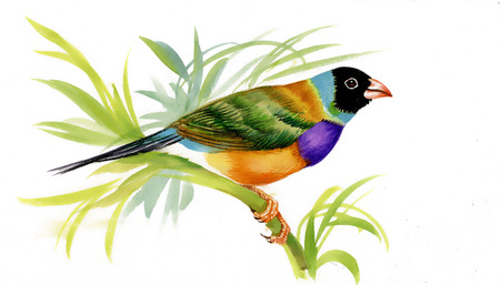 Drawing of beautiful bright birds photo