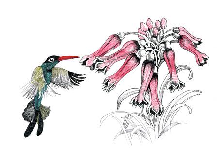 humming: Humming bird with flowers Illustration