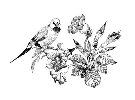 Wild exotic bird on twig Stock Photo
