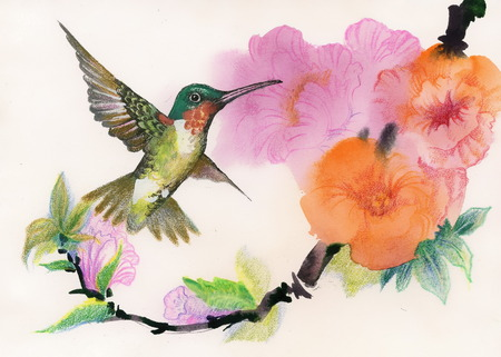 Drawing of beautiful bright birds and flowers Vector
