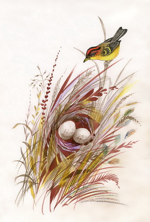 nature one painted: Watercolor painted bird and nest with eggs