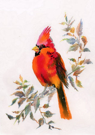 Watercolor painting of cardinal bird sitting on a branch Ilustracja