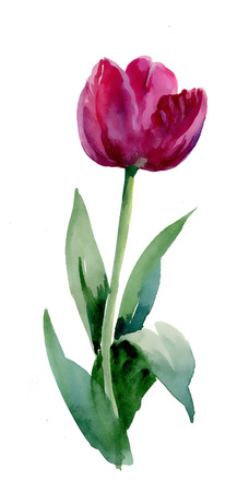 Watercolor tulip Vector