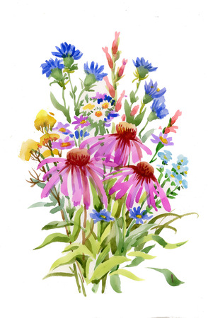 wildflowers: Bouquet of colorful wildflowers Illustration