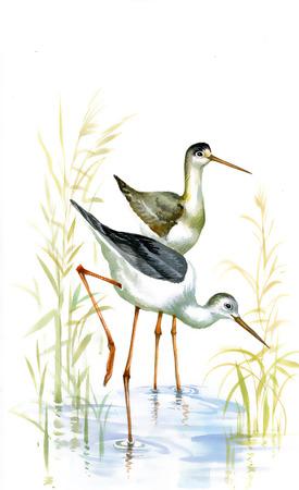 duck green: Ducks sail in lake
