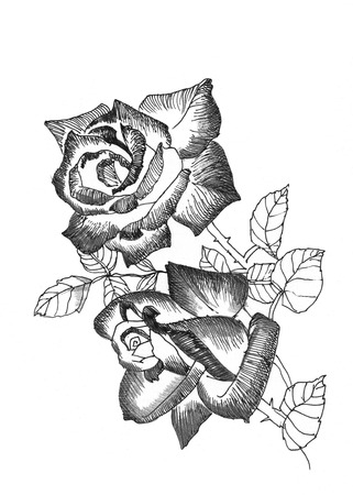 Hand drawn rose flowers on white background