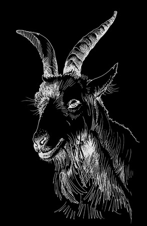 goat head: Goat head hand drawn isolated on black background