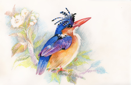 Drawing of beautiful bright bird and flowers Vector