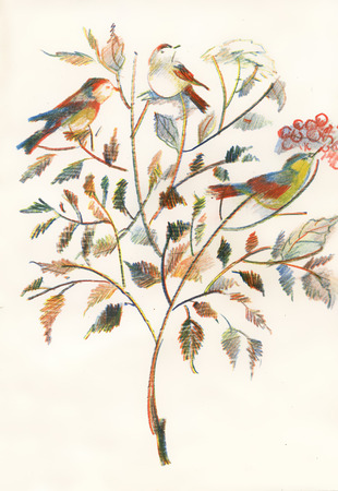 Drawing of beautiful bright birds and flowers photo