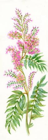 Summer pink wildflower