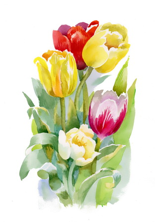 Watercolor tulips bouquet Vector