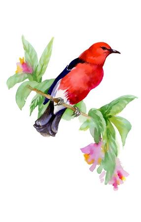 a twig: Wild bird on twig