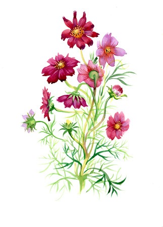 wildflowers: Colorful watercolor wildflowers illustration on white background Illustration